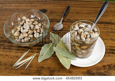 Mediterranean Snails On Wood Table.
