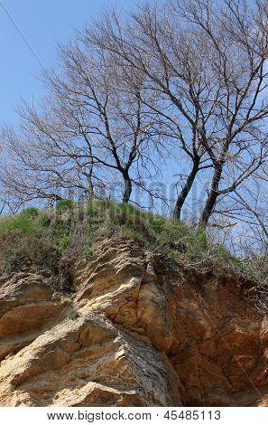 Trees Growing On Precipice