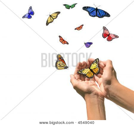 Hands Releasing Butterflies Into Blank White Space