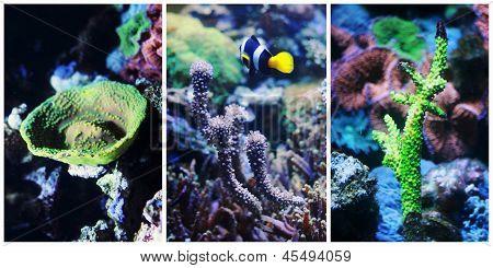 Underwater Landscape Collage