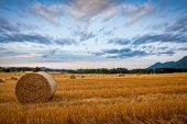 image of hay bale  - Bale of hay on the wheet field dramatic morning sky - JPG
