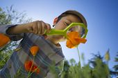 stock photo of observed  - Child observing nature with a magnifying glass in a garden - JPG