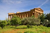 pic of sicily  - Greek Temple of Concordia Agrigento Sicily Italy - JPG