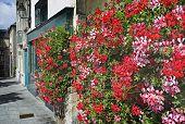 Постер, плакат: Яркий красный герани в очаровательном французский Бретон деревенская улица
