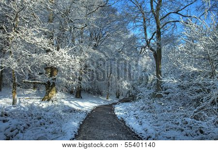 Worcwestershire Woodland in Winter