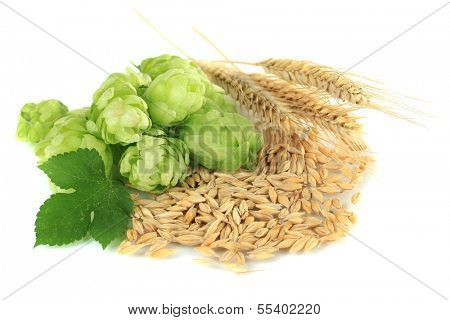 Fresh green hops and barley, isolated on white