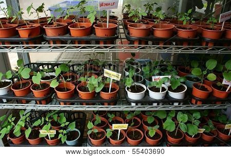Vegetable Starter Plants 's Pots At Fair