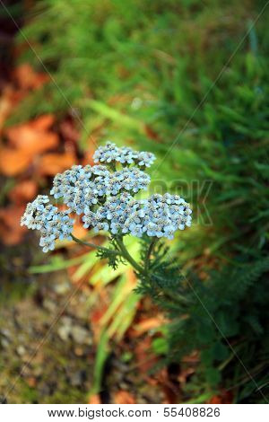 Pretty Blue dainty flowers