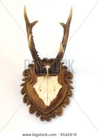 Horns Of Roe