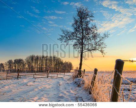 Frozen Fence