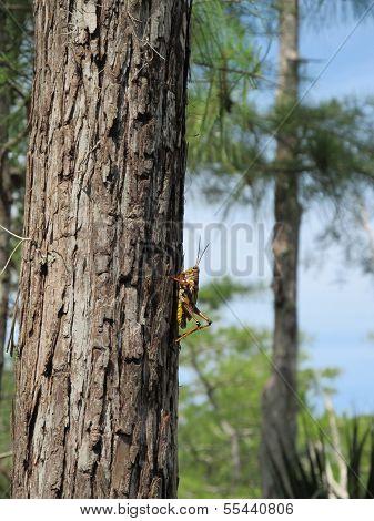 Grasshopper Walking up a Tree2