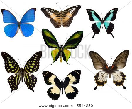 Seven Tropical Butterflies