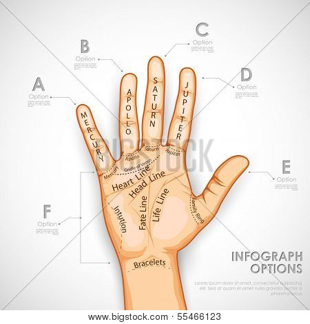 illustration of palmistry infographics describing different lines