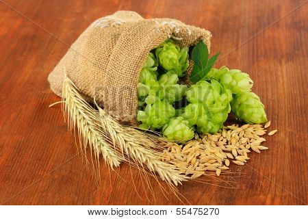 Fresh green hops in burlap bag and barley, on wooden background