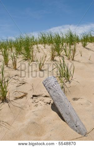 Beach Dune With Grass