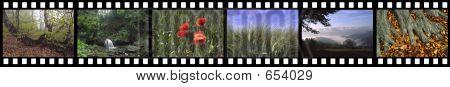 filmstripnature