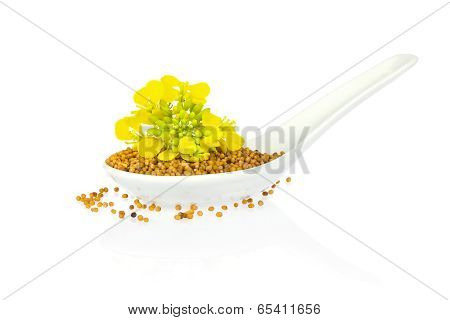 Seed And Flower Of Mustard   In Porcelain Spoon