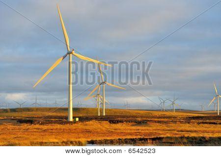Gran parque eólico