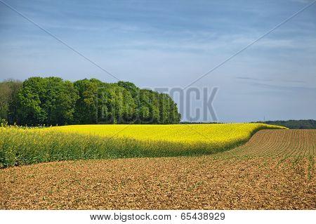 Rural Landscape In Wallonia