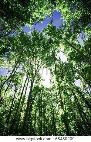 Sun Light Between The Trees