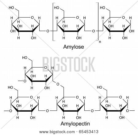 Structural Components Of The Starch. Chemical Formula