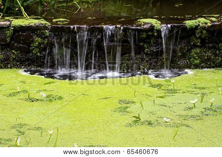 Waterfall In Forest And Marsh Duckweed