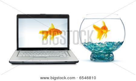 Goldfishes