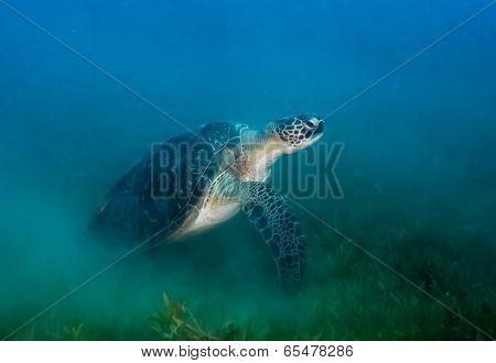 Turtle atmosphere