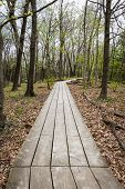 pic of starving  - wooden path marking a hiking trail in the starved rock state park in Illinois - JPG
