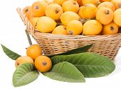 pic of loquat  - Branch of loquat and basket with fruits - JPG