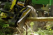 stock photo of big-rig  - Cutting down trees industries big machine works - JPG