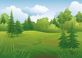 picture of blue spruce  - Landscape - JPG