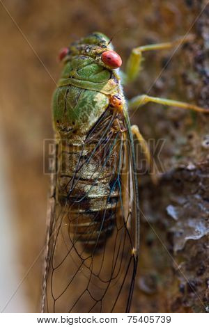 A cicada at waterfall in chiangrai thailand.