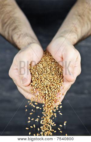 Hands Pouring Grain