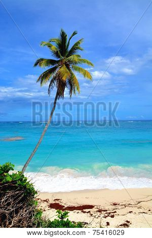 Barbados, Bottom Bay