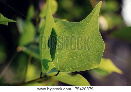 green leaves under sunshine