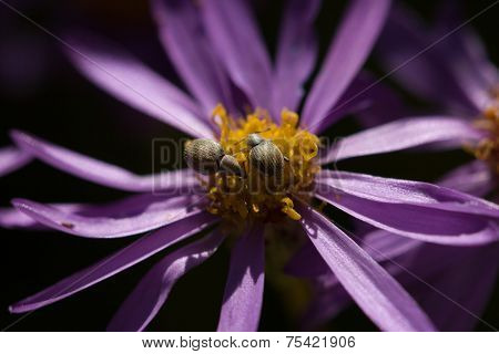 Purple Flower With Aphids