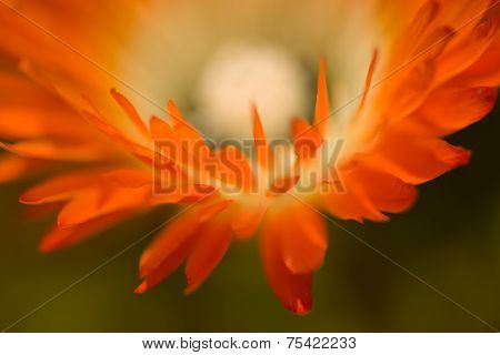 Orange Flower Macro In Landscape