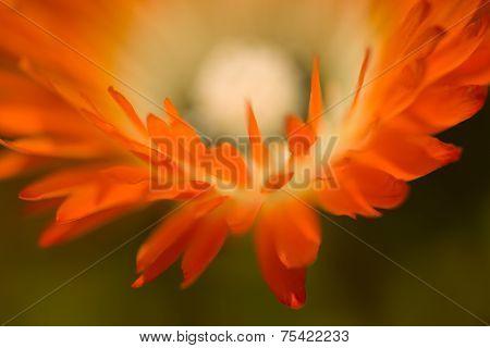 Orange Flower Macro In Landscape