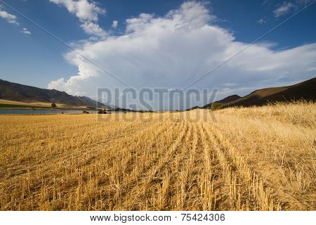 Converging, Curving Agricultural Landscape