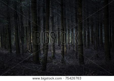 Dark And Scary Forest