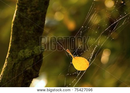 Yellow Leaf On The Web
