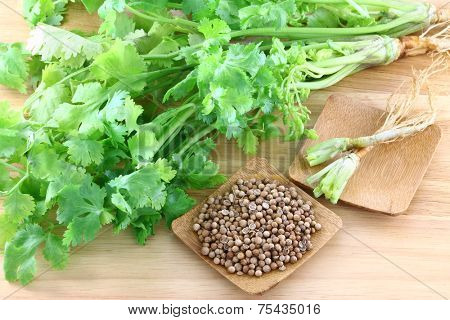 Closeup photo of fresh coriander, cilantro and a bowl of seeds