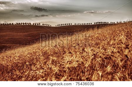 Grunge photo of golden dry wheat hills, agricultural landscape, beautiful panoramic view, autumn harvest season concept