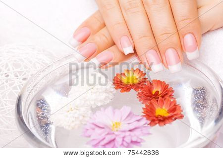 French Manicure With Colorful Chrysanthemum