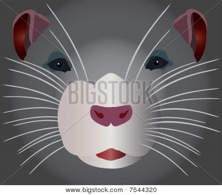 grey rodent