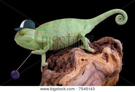Chameleon Yoyo