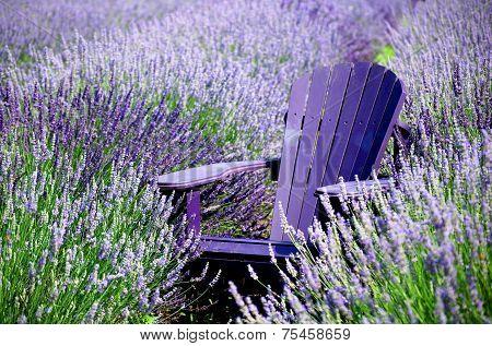 Rest in lavender/ Repos dans les lavandes