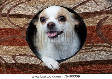 Photo of puppy in the kennel