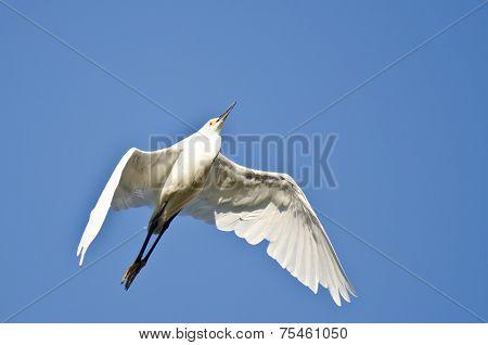 Snowy Egret Flying In A Blue Sky